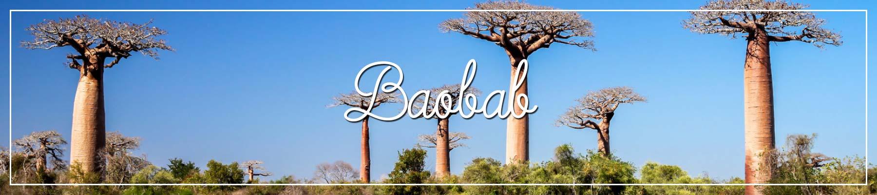 Baobab Baum Afrika